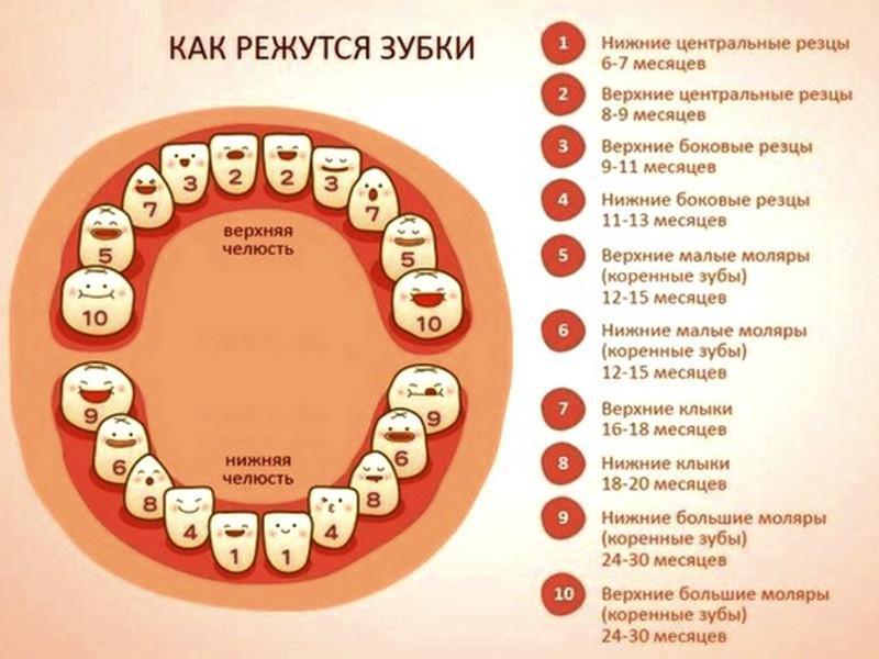 Зубы у детей: порядок прорезывания, признаки и сроки 1