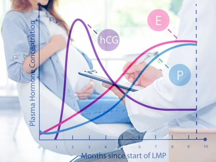 ХГЧ при беременности: как меняется его концентрация?